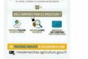 Déclaration annuelle de ruches : Du 1er septembre au 31 décembre