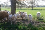 L'Ain de ferme en ferme : la ferme du Pomet